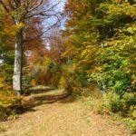 Herbstwald, Naturverbundenheit, Natur, hsp academy, Geomantie
