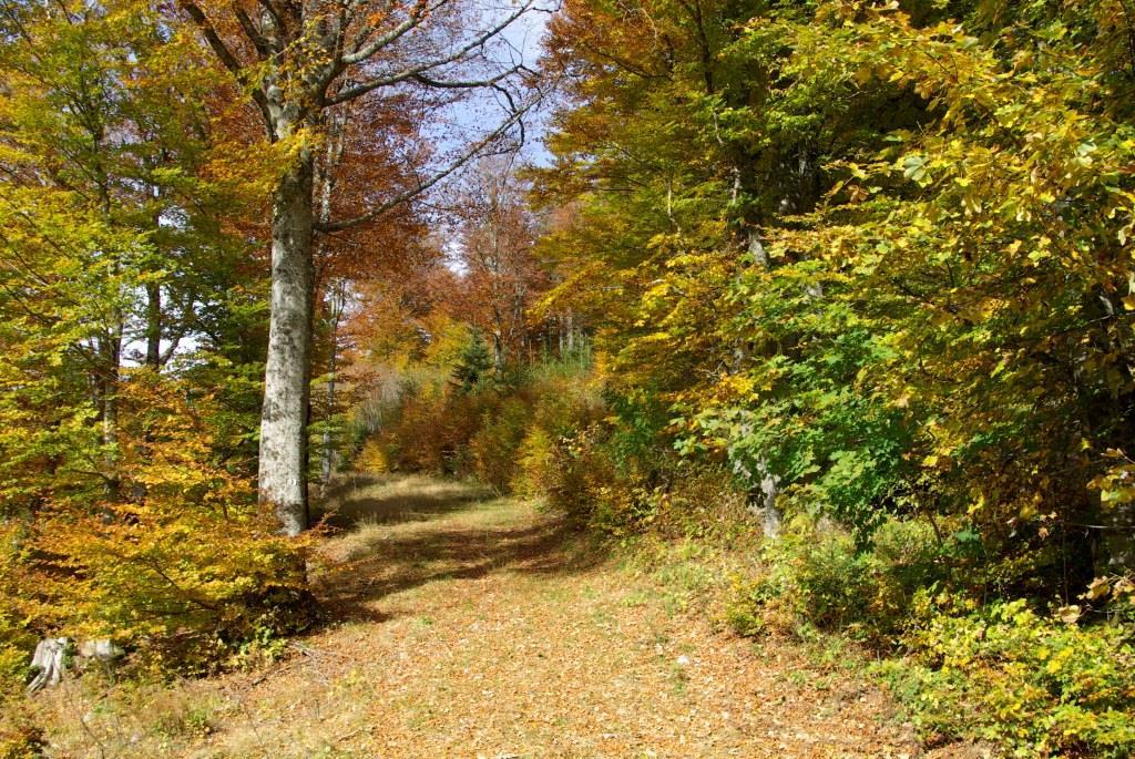 Herbstwald, klein