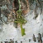 Bäume als Schlüssel zur Heilung