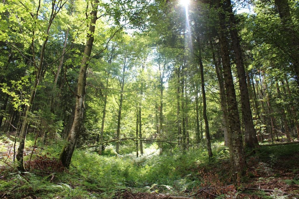 Wald im Sommer