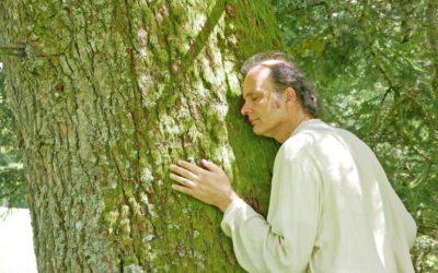 Bäume umarmen, Meditation im Wald als Kraftquelle