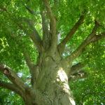 Hochsensibilität und Naturverbundenheit