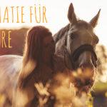 Psychotherapie für Hochsensible, Weltschmerz, Mitgefühl für Tiere