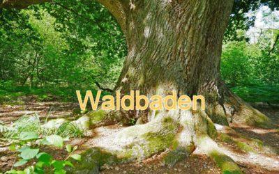 Der Wald als Heiler, unsere spirituellen Wurzeln