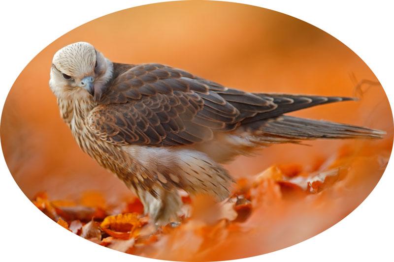 Seelenvögel